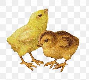 Golden Peacock - Easter Bunny Chicken Clip Art PNG