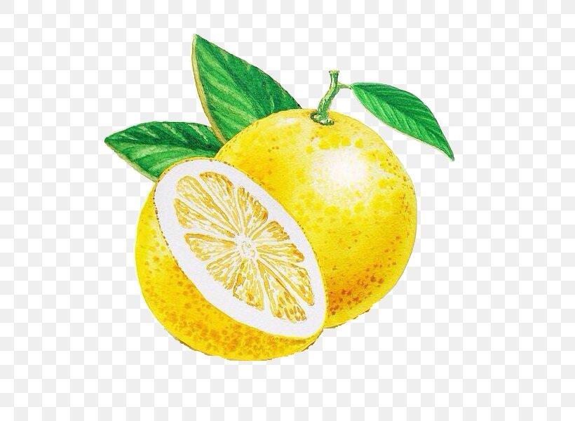 Lemon Grapefruit Persian Lime Rangpur Citrus Junos, PNG, 600x600px, Lemon, Art, Artist, Bitter Orange, Canvas Download Free