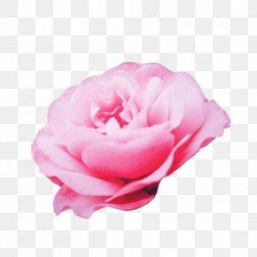 Mothers-day BACKGROUND - Garden Roses Cabbage Rose Floribunda Etsy Energy PNG