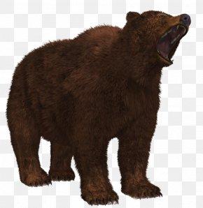 Bear 8 - Grizzly Bear Brown Bear American Black Bear PNG