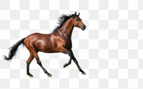 Horse - Horse High-definition Television Equestrianism 4K Resolution Wallpaper PNG