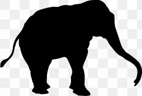 Indian Elephant African Elephant Cat Terrestrial Animal PNG