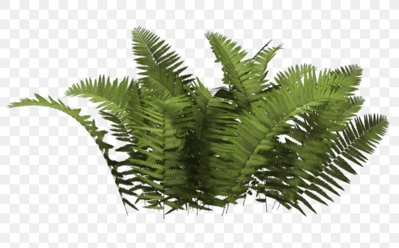 Shrub Plant, PNG, 1024x639px, Shrub, Evergreen, Fern, Ferns And Horsetails, Grass Download Free