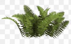 Bush Image - Shrub Plant PNG