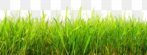 Grass - Cartoon Clip Art PNG