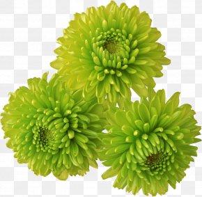 Chrysanthemum - Chrysanthemum Flower Clip Art PNG