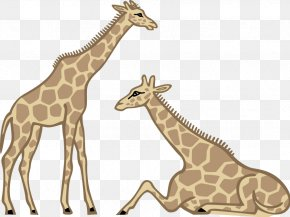 Giraffe Photographs - Giraffe Drawing Cartoon Clip Art PNG