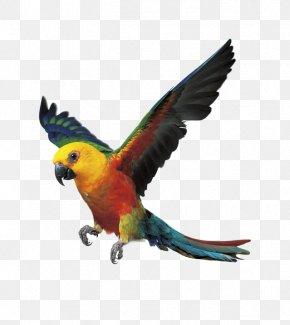 Parrot - Parrot Bird Budgerigar Cockatiel Conure PNG