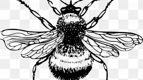 Bumble - European Dark Bee Drawing Honey Bee Clip Art PNG