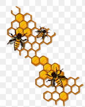 Bee - Bee Honeycomb Insect Clip Art PNG