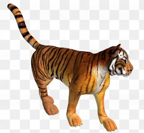 Tiger Tiger Stock Photos - Tiger Lion Leopard Felidae PNG