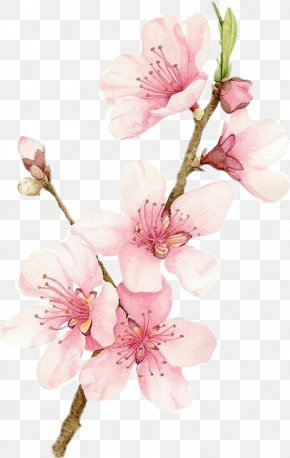 Painting - Cherry Blossom Watercolor Painting Drawing PNG