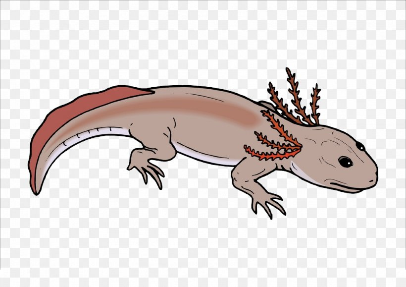 Salamander Chinese Fire Belly Newt Lizard Axolotl, PNG, 1024x724px, Salamander, Amphibian, Animal, Axolotl, Chinese Fire Belly Newt Download Free