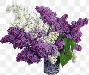 Multi Color - Common Lilac Flower Desktop Wallpaper PNG
