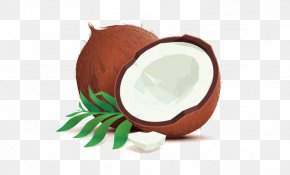 Natural Coconut Oil - Coconut Water Illustration Drawing Vector Graphics PNG