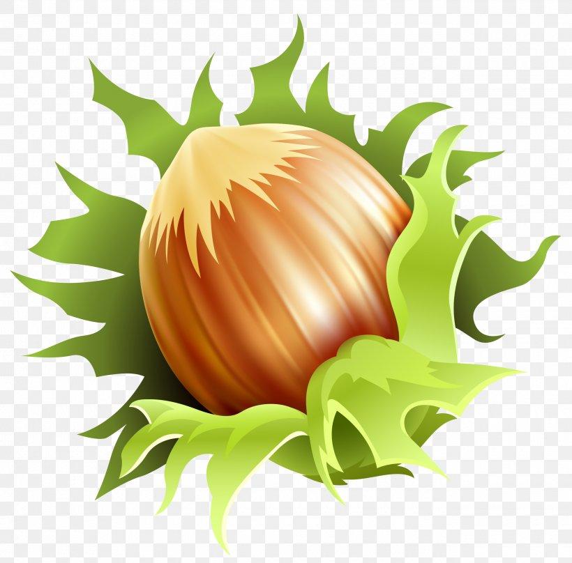 Almond Euclidean Vector Nucule Clip Art, PNG, 2580x2544px, Ice Cream Cones, Clip Art, Cucurbita, Drawing, Flower Download Free