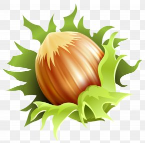 Hazelnut Clipart Image - Almond Euclidean Vector Nucule Clip Art PNG