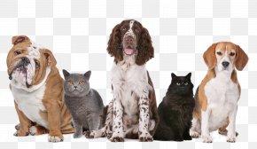 Dog Transparent Image - Dog United Kingdom Pet Sitting Cat PNG