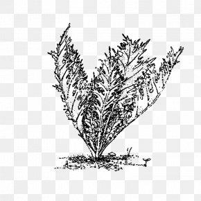 Leaf - Twig Grasses Plant Stem Leaf Line Art PNG