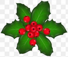 Mistletoe - Christmas Plants Mistletoe Clip Art PNG