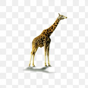 Giraffe Shaded - Northern Giraffe Download Computer File PNG