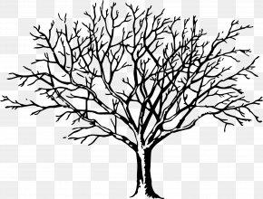Walnut - Tree Branch Clip Art PNG