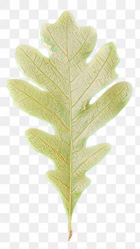Vascular Plant Flower - Oak Tree Leaf PNG