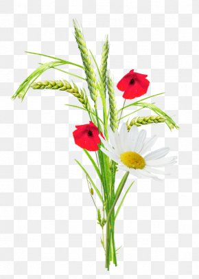 Cartoon Creative Flower Plant Wheat - Poppy Flower Clip Art PNG