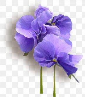 Elegant Violet - Viola Tricolor Clip Art PNG