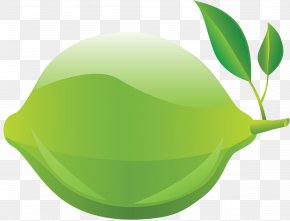 Lime - Clip Art Transparency Desktop Wallpaper Lime PNG