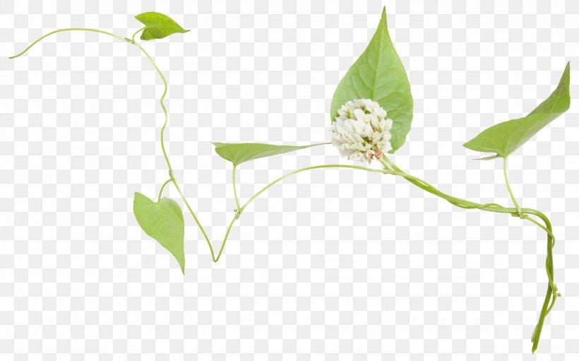 Leaf Green Twig Flower, PNG, 2886x1799px, Leaf, Branch, Flora, Floral Design, Flower Download Free