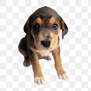 Tube - Puppy Cat Food Mongrel Purebred Dog PNG