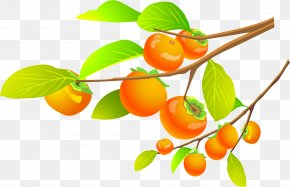 Persimmon Tree - Microsoft Word Template Document File Format Icon PNG