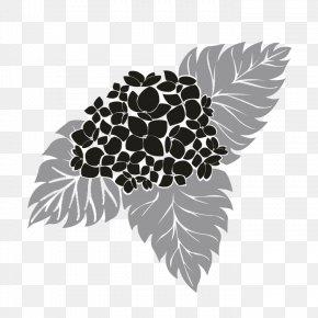 Hydrangea - Black And White Visual Arts Leaf Tree Plant PNG