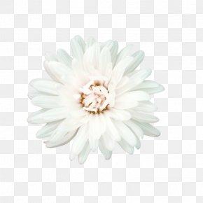 White Flowers - Flower White Petal PNG