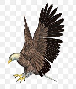 Eagle 4 - Bald Eagle Bird Flight Hawk PNG