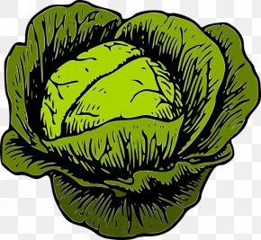 Cabbage Clip Art Cauliflower Vegetable PNG