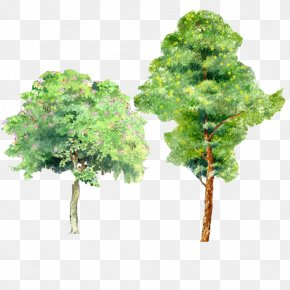 Trees Watercolor Picture Material PNG
