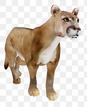Horse Lion Stable Cat Animal PNG