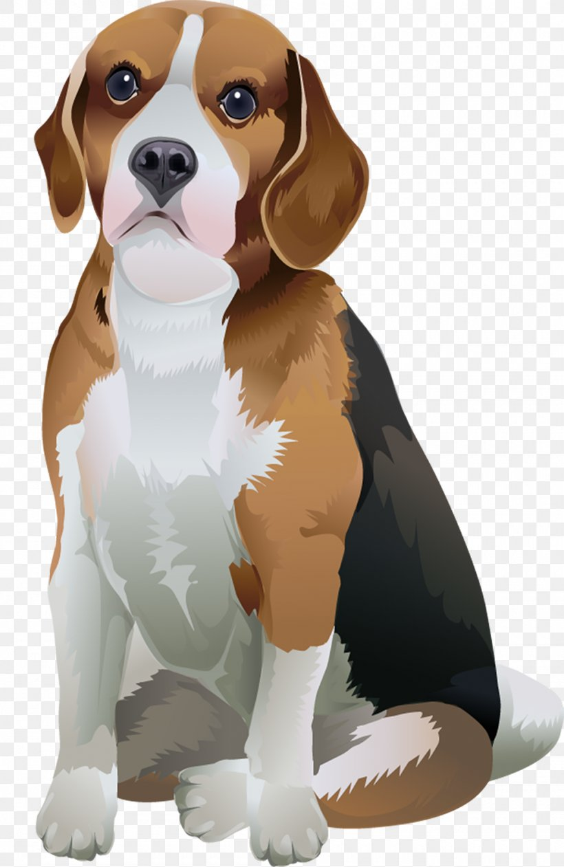 Beagle Harrier Puppy Finnish Hound Dog Breed Png 1000x1538px Beagle Animation Beagleharrier Beaglier Breed Download Free