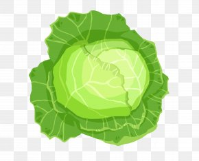 Vector Cabbage Leaves - Leaf Vegetable Cabbage PNG