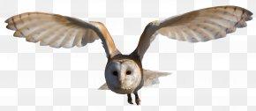 Owl - Barn Owl Clip Art PNG