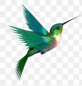 A Hummingbird - Hummingbird Clip Art PNG