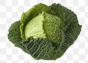Cabbage - Savoy Cabbage Leaf Vegetable Broccoli PNG