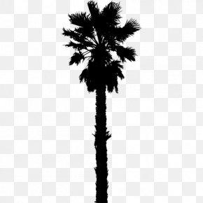Date Palm - Arecaceae Date Palm Silhouette Clip Art PNG