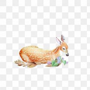 Deer - Red Deer Roe Deer Elk PNG