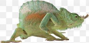 Lizard - Monitor Lizard Reptile Chameleons Vertebrate PNG
