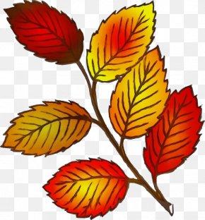 Plant Stem Autumn - Autumn Leaf Drawing PNG