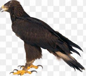 Eagle Image Download - Eagle Bitmap Computer File PNG