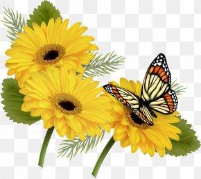 Butterfly - Butterfly Clip Art Borders And Frames Desktop Wallpaper PNG